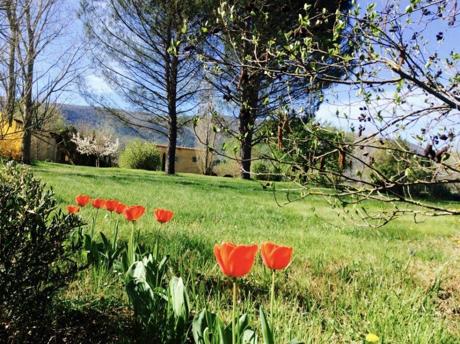 Jardin au Mas de L'Olivier