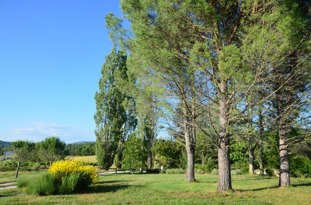 Jardin du Mas de L'olivier à Céreste